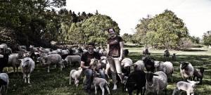 Kulla Lamm – populär fårfarm i Kullabygden