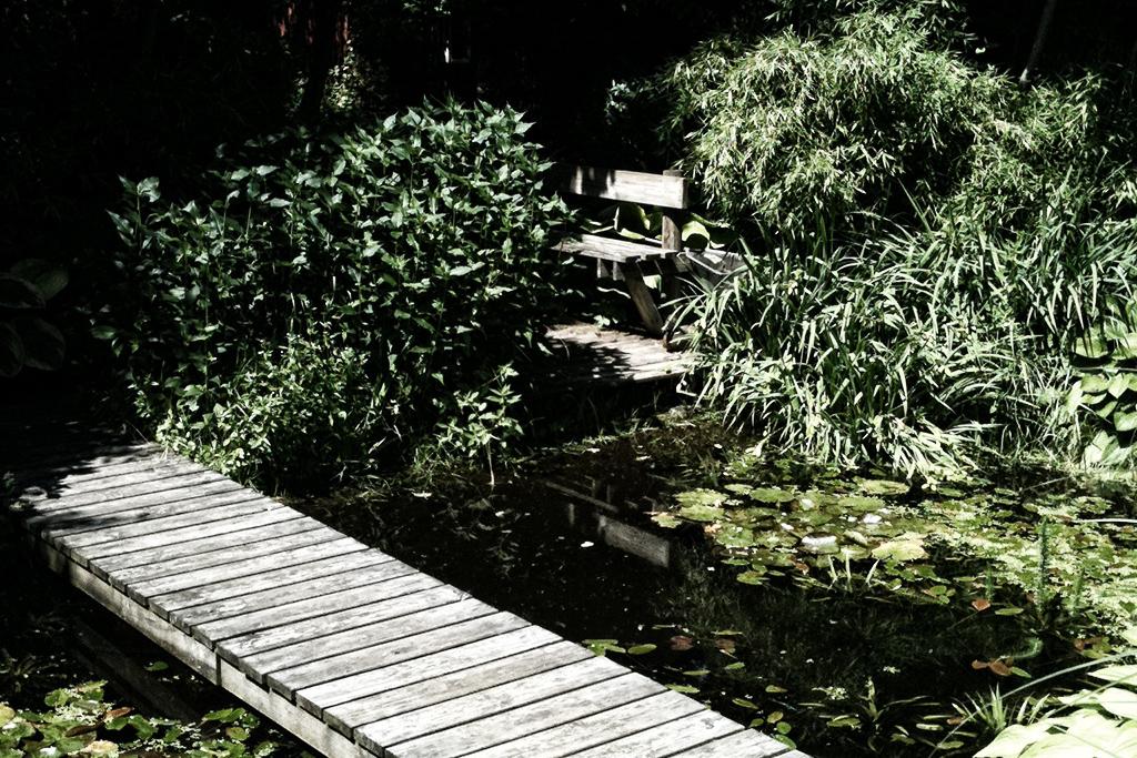 Lotties trädgård3