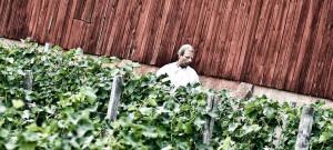 Välkommen till Sveriges första vingård