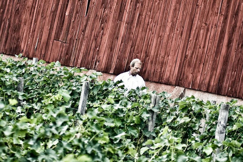 himlamycketsverige tipsar om Blaxsta vingård utanför Flen