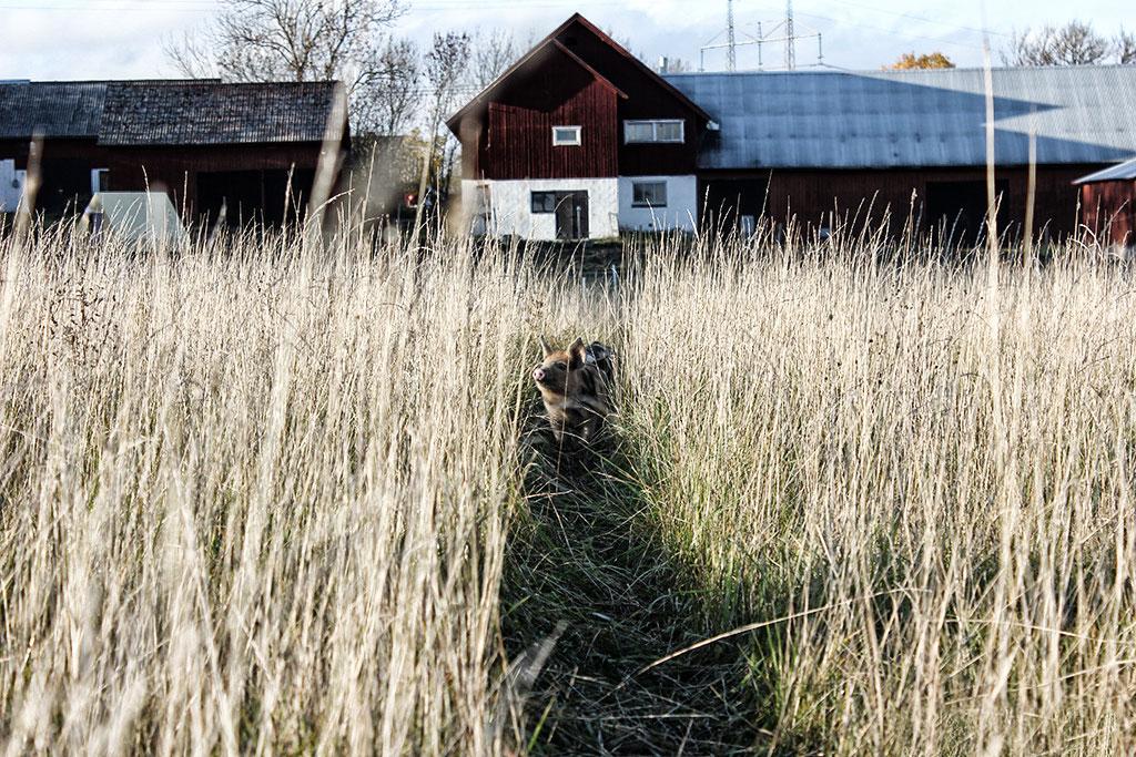 himlamycketsverige tipsar om Franzéns charkuterier i Örsundsbro