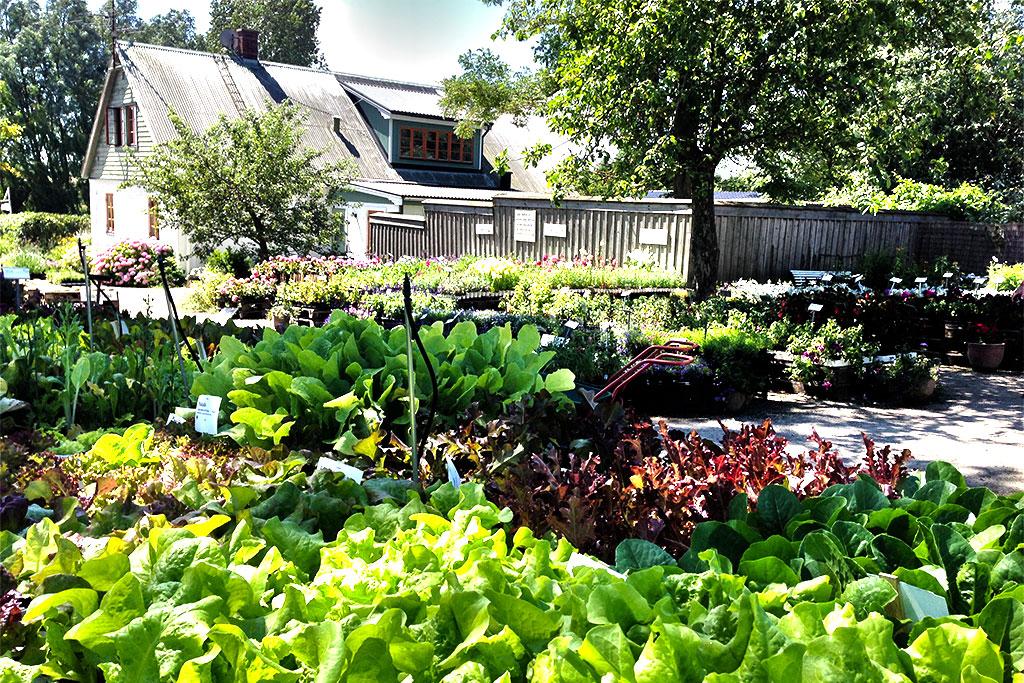 himlamyckesverige besöker Åbergs trädgård